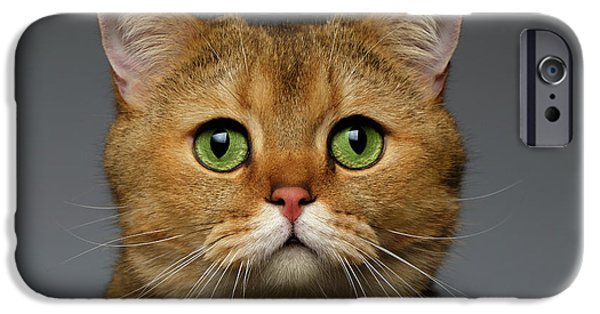 Closeup Golden British Cat With  Green Eyes On Gray IPhone 6s Case by Sergey Taran