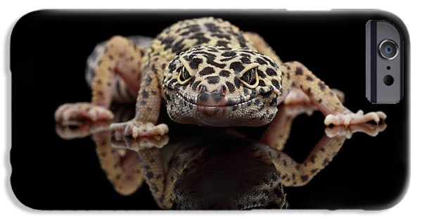 Closeup Leopard Gecko Eublepharis Macularius Isolated On Black Background, Front View IPhone 6s Case by Sergey Taran