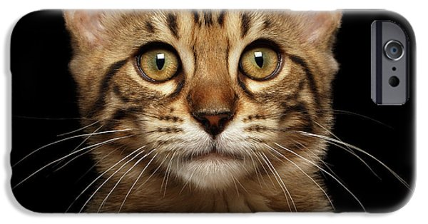 Closeup Portrait Of Bengal Kitty Isolated Black Background IPhone 6s Case by Sergey Taran