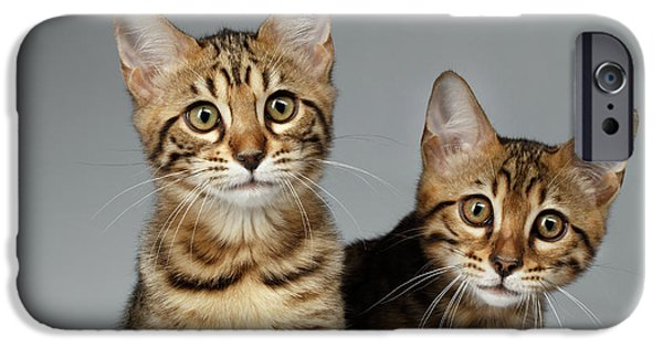 Closeup Portrait Of Two Bengal Kitten On White Background IPhone 6s Case by Sergey Taran