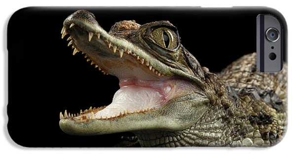 Closeup Young Cayman Crocodile, Reptile With Opened Mouth Isolated On Black Background IPhone 6s Case by Sergey Taran