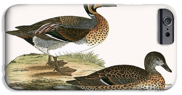 Clucking Teal IPhone Case by English School