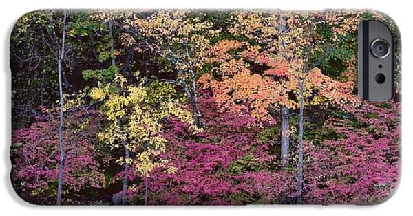 Colorful Fall Foliage IPhone Case by Rona Black