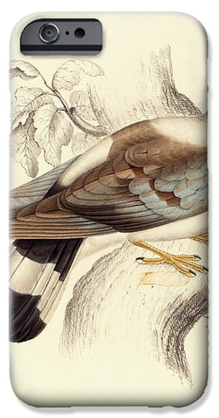 Columba Leuconota, Snow Pigeon IPhone 6s Case by Elizabeth Gould