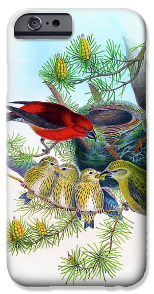 Common Crossbill Antique Bird Print John Gould Hc Richter Birds Of Great Britain  IPhone 6s Case by Orchard Arts