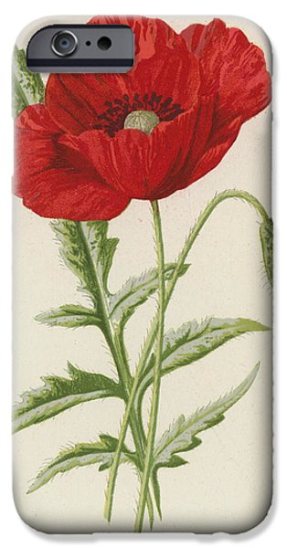 Common Poppy IPhone Case by Frederick Edward Hulme