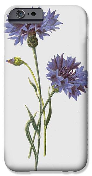 Corn Blue Bottle IPhone Case by Frederick Edward Hulme