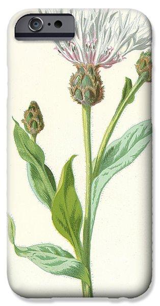 Cornflower IPhone Case by Frederick Edward Hulme