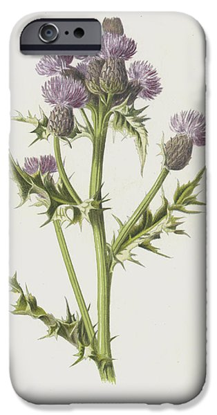 Creeping Thistle IPhone Case by Frederick Edward Hulme