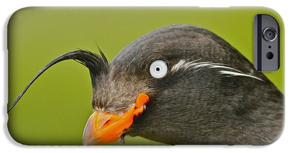 Crested Auklet IPhone 6s Case by Desmond Dugan/FLPA