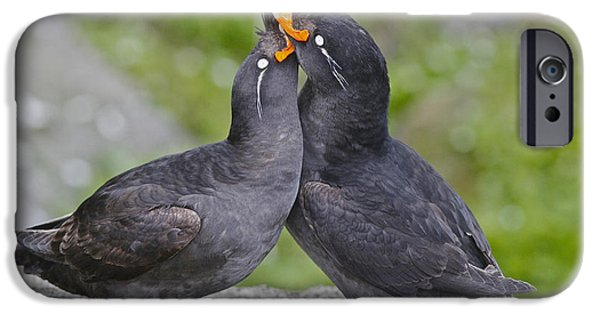 Crested Auklet Pair IPhone 6s Case by Desmond Dugan/FLPA