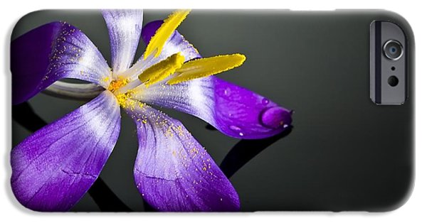 Crocus IPhone Case by Svetlana Sewell