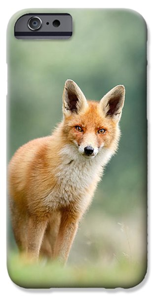 Curious Fox IPhone 6s Case by Roeselien Raimond