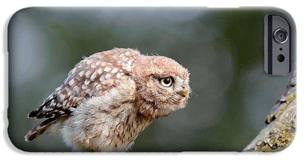 Cute Little Owlet IPhone Case by Roeselien Raimond