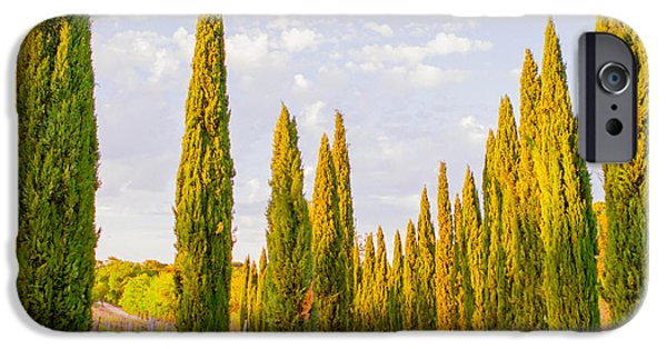 Cypress Trees In Tuscany IPhone Case by Ariane Moshayedi