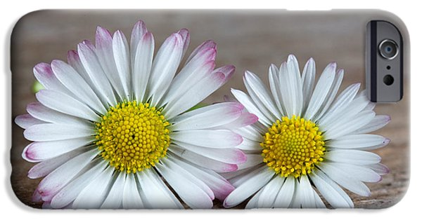 Daisy Flowers IPhone Case by Nailia Schwarz