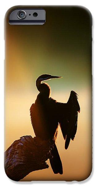 Darter Bird With Misty Sunrise IPhone 6s Case by Johan Swanepoel