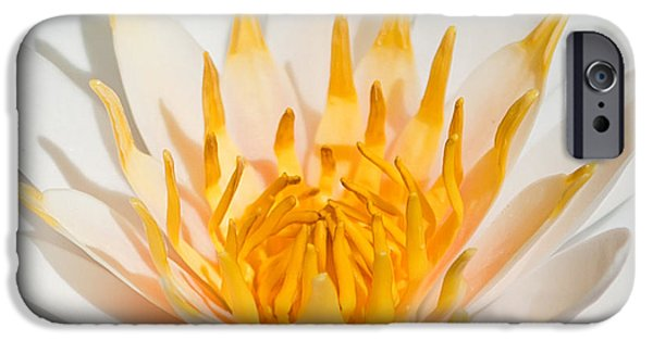 Delicate Touch IPhone Case by Az Jackson