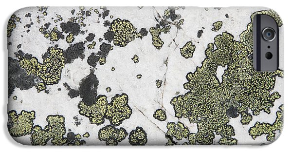 Detail Of Lichen On A White Rock Lake IPhone Case by Michael Interisano