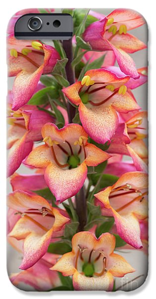 Digitalis Illumination Flame IPhone Case by Tim Gainey