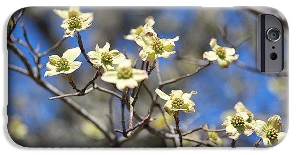 Dogwood In Bloom IPhone Case by Cynthia Guinn