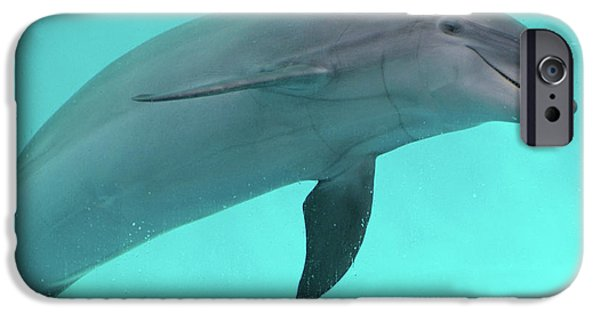 Dolphin IPhone 6s Case by Sandy Keeton