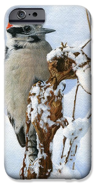 Downy Woodpecker  IPhone 6s Case by Ken Everett