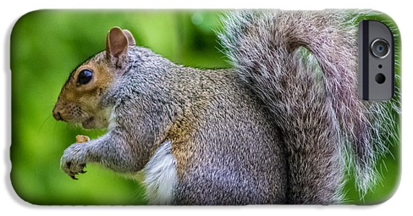 Eastern Grey Squirrel IPhone Case by Martin Newman