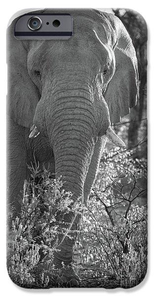Elephant Portrait IPhone Case by Inge Johnsson
