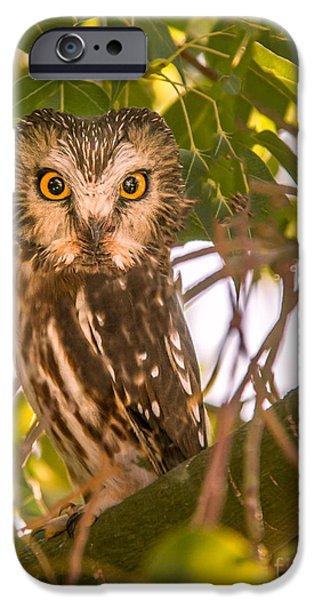 Elf Owl IPhone Case by Robert Bales