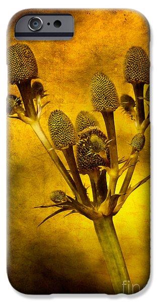 Eryngium Gold IPhone Case by John Edwards