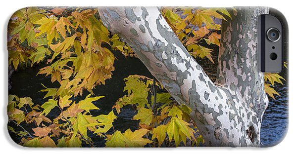 Fall Colors At Slide Rock Arizona- Tree Bark IPhone Case by Dave Dilli