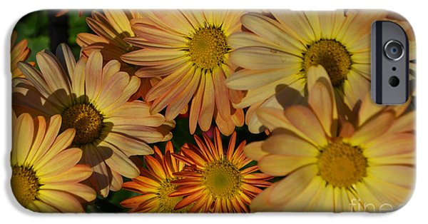 Fall Flowers In Madison  IPhone Case by Amy Lucid