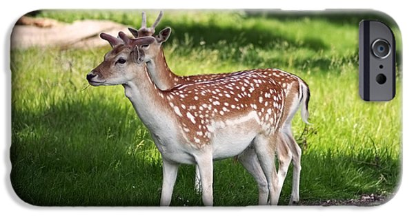 Fallow Deer In Richmond Park IPhone 6s Case by Rona Black