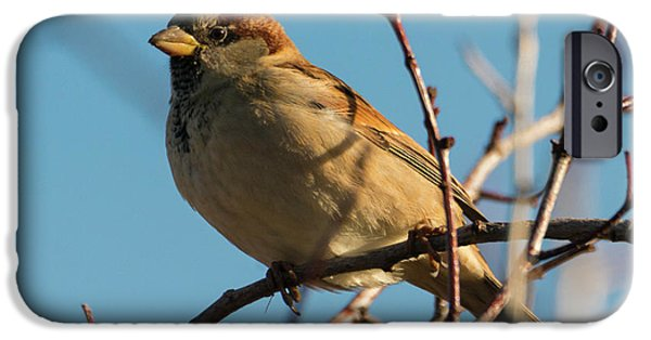 Female House Sparrow IPhone 6s Case by Mike Dawson
