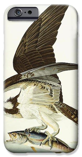 Fish Hawk IPhone 6s Case by John James Audubon