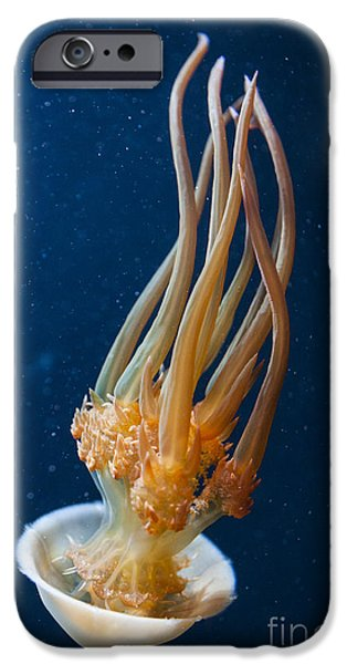 Flame Jelly IPhone Case by Jason O Watson