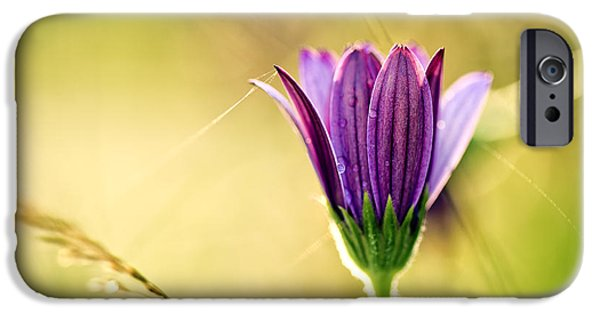 Flower On Summer Meadow IPhone Case by Nailia Schwarz