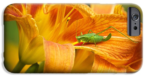 Flower With Company IPhone 6s Case by Christina Rollo