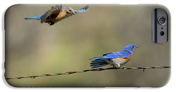 Flying To You IPhone 6s Case by Mike Dawson