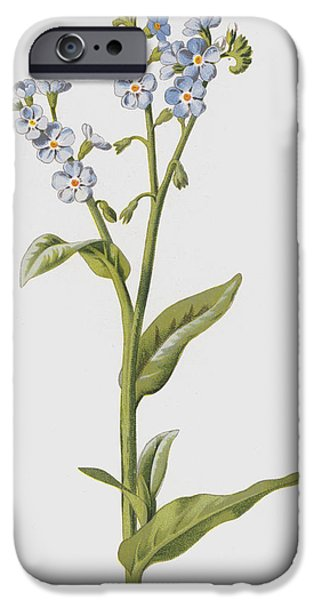 Forget Me Not IPhone Case by Frederick Edward Hulme