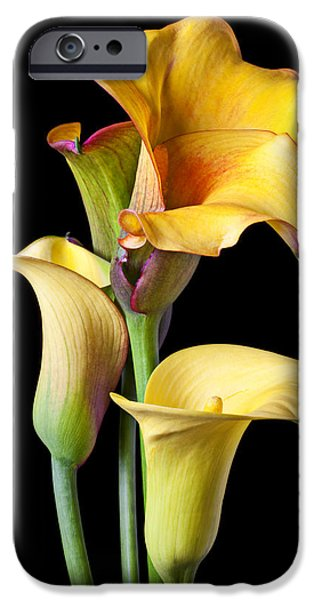 Four Calla Lilies IPhone 6s Case by Garry Gay
