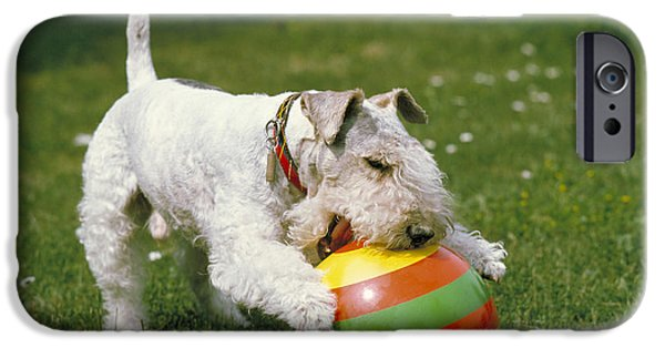 Fox Terrier With Ball IPhone Case by Frederick Ayer III