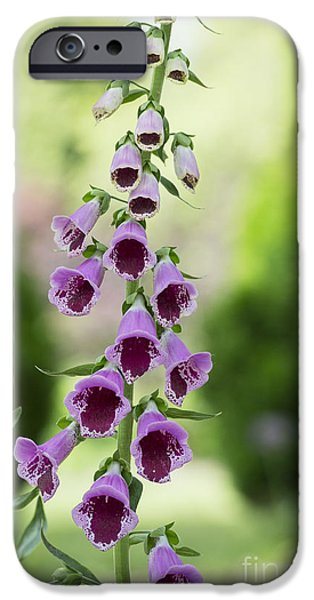 Foxglove Sugar Plum IPhone Case by Tim Gainey