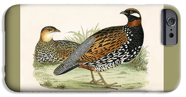 Francolin IPhone 6s Case by English School
