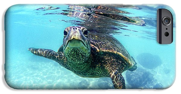 friendly Hawaiian sea turtle  IPhone Case by Sean Davey