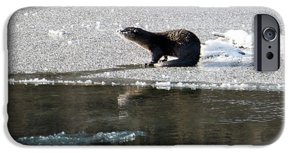 Frosty River Otter  IPhone 6s Case by Mike Dawson