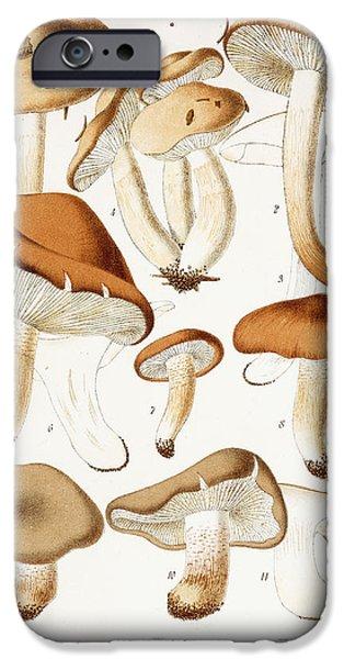 Fungi IPhone 6s Case by Jean-Baptiste Barla