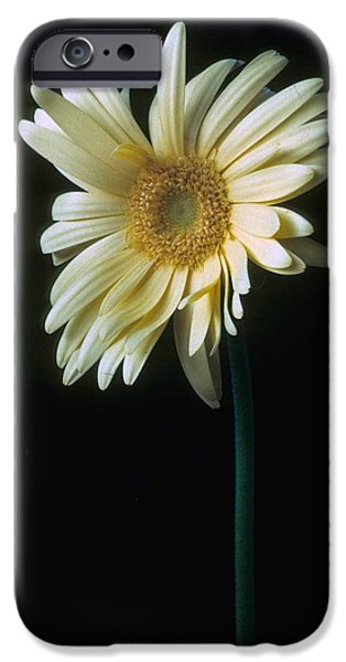 Gerber Daisy IPhone 6s Case by Laurie Paci