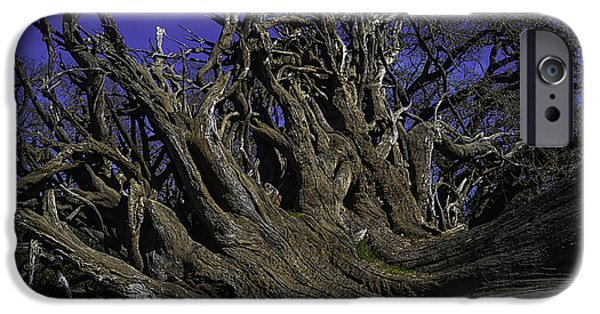 Giant Tree Roots IPhone Case by Garry Gay